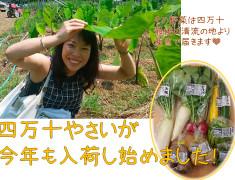 四万十野菜01