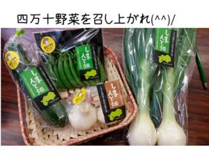 四万十野菜07